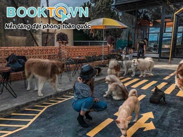 hội quán chó mèo